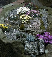 Image of Saxifraga sect. Porphyrion - collections by Mike Ireland : - click to view the full size picture